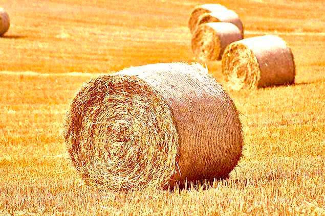 fotowoltaika-dla-rolnika-p111
